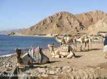 ScubaAroundTheWorld.com - blog: dive destination Dahab