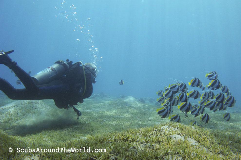 ScubaAroundTheWorld.com - best dive sites in Dahab Egypt