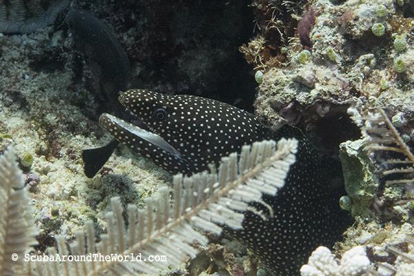 ScubaAroundTheWorld.com - Tips for dive holidays with kids - Bunaken Indonesia
