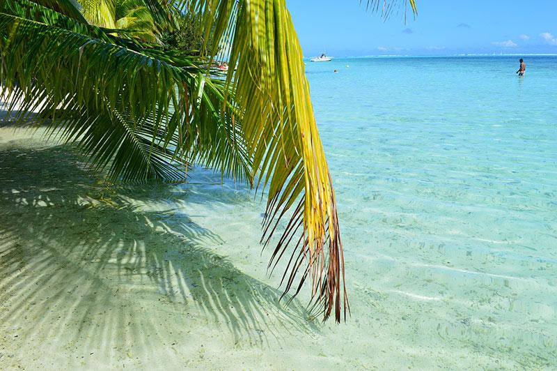ScubaAroundTheWorld.com - Bora Bora French Polynesia diving