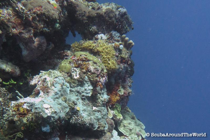 ScubaAroundTheWorld - Scuba diving Bunaken Indonesia - amazing wall dives