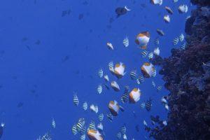 Scuba Diving Bunaken Indonesia