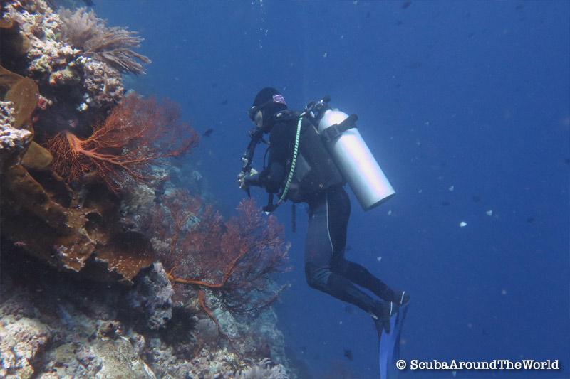 ScubaAroundTheWorld - Scuba diving Bunaken Indonesia - scuba diver