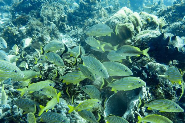 Best scuba destinations for new divers - scuba diving Cozumel, Mexico