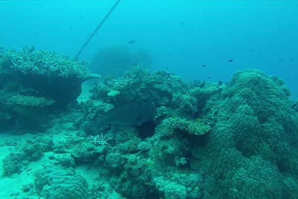 Best scuba destinations for new divers - scuba diving Great Barrier Reef