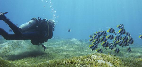 Best scuba destinations for new divers